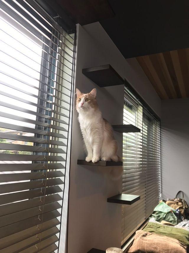 2匹の猫用のキャットウォーク